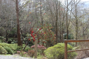 Spring is in the air at Mount Lofty Botanical Gardens