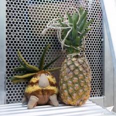 _kay-cann-photography27-misc-grug-meets-pineapple